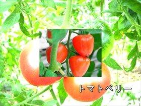 10月10日はトマトの日 Game Screen Shot4