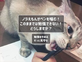 猫飼いシミュレーション Game Screen Shot3