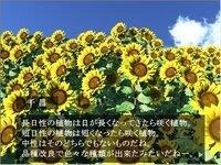 君に捧げる生物のソラゴト ~向日葵編~